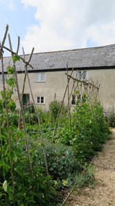Fresh-produce-growing-in-the-River-Cottage-garden.